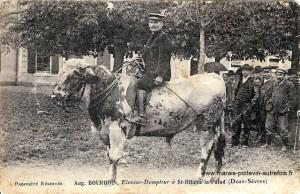 Auguste Bourgoin, éleveur-dompteur de taureau